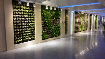 Live plants lined the halls at the airport